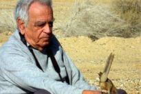 Scienza, addio all'etologo Amotz Zahavi: ipotizz la selezione delle specie basato sull'handicap