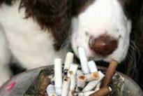 Gran Bretagna, i cani e i gatti dei fumatori vivono di meno: lo svela una ricerca sul tabagismo