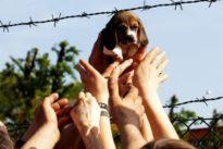 Brescia, assolti i veterinari della Green Hill. Proteste degli animalisti