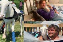 Spendono 40mila dollari per curare la pecora disabile: «Abbiamo dovuto rimandare il nostro matrimonio»