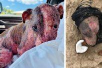 Cagnolina sepolta viva in spiaggia con la testa al sole: salvata, ora cerca una famiglia