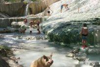 Il maiale alle terme si accomoda tra i bagnanti, lo scatto diventa virale