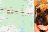 Cane abbandonato, percorre 200 km in Siberia tra lupi e orsi per raggiungere il padrone