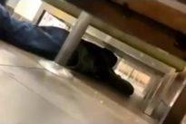 Sparatoria in Texas, il video nel centro commerciale. Le grida, i colpi: «Io e mia mamma siamo nascoste sotto i tavoli»